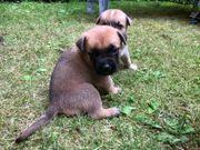 Hunde Welpen Mix