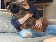 Minihund KINDERLIEB VERSCHMUST