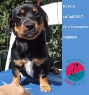 RESERVIERT Rosalie