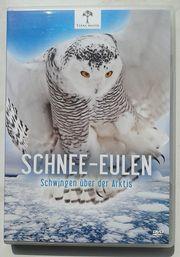 Schnee-Eulen - Schwingen