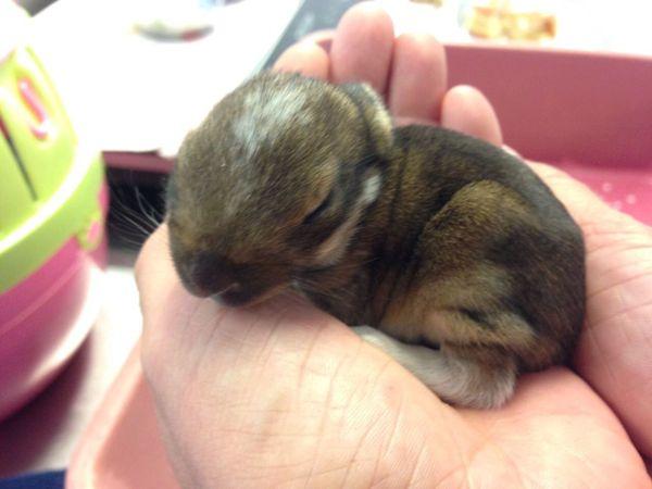 Kaninchenbabys aus Handaufzug » Kleintiere