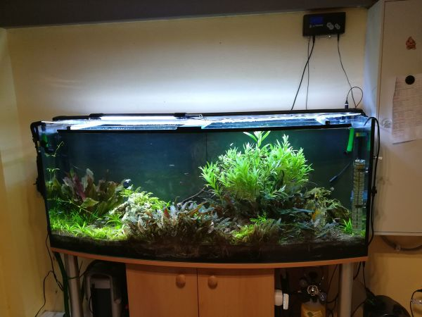 aquaristik in speyer bei deinetierwelt. Black Bedroom Furniture Sets. Home Design Ideas