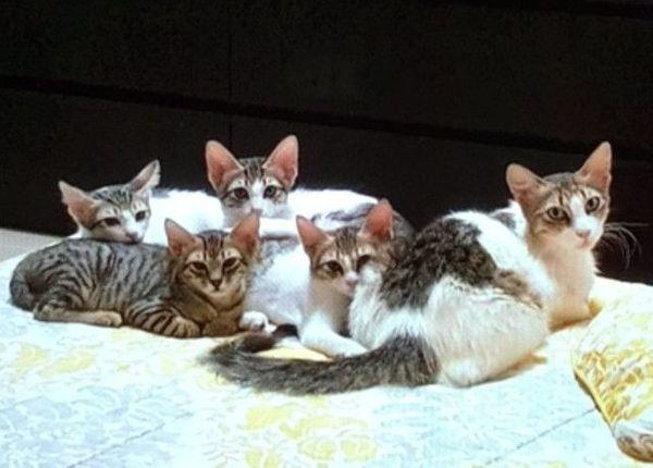 Pflegestellen gesucht - Schwäbisch Hall - Europäisch KurzhaarKatzenbabyKatzenvermittlung-BW sucht Sie! Sie lieben Tiere, insbesondere Katzen?, Sie würden sich gerne ehrenamtlich engagieren? Eine Möglichkeit wäre Pflegestelle zu werden - für erwachsene Katzen, die ausgesetz - Schwäbisch Hall