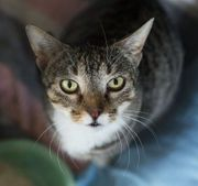 Letizia - zauberhaftes Katzenmädchen wartet auf