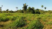 Brasilien 290 Ha Grundstück mit