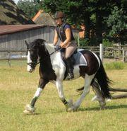 Pferdegercht reiten als REITBETEILIGUNG nach
