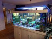 Meerwasseraquarium komplett 150x80x70