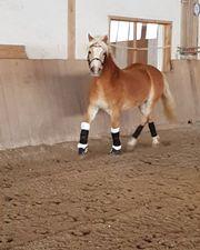 Traum Pony sucht reitbeteiligung