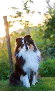 Liebevolle Haustierbetreuung(egal