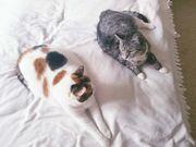 Katzen Ally und