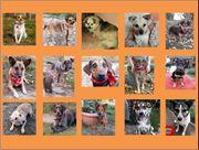 Wir Hunde vom Tierschutzhof Neuruppin