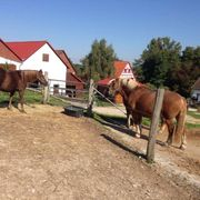 Pferdebox in Ebersbach frei