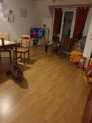 2-Zimmer Wohnung zur Nachmiete