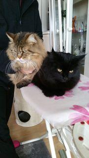Catsitter in - Katzenbetreuerin