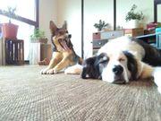 Hundesitter gesucht
