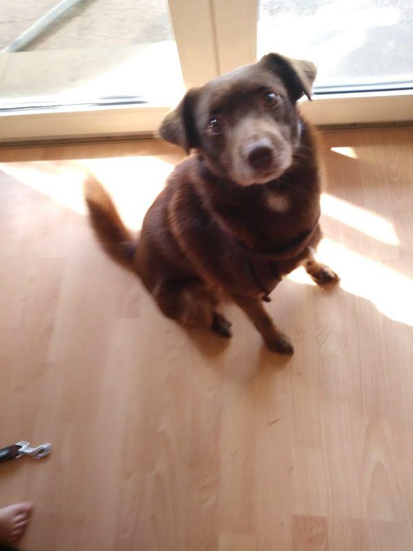 Milo sucht ein » Hunde