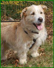 Pitt 6 Jahre - Terrier-Mix - Tierhilfe