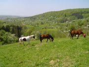 Großer Paddock Trail mit Offenstall