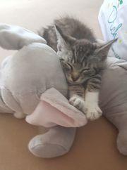 Kleines Kätzchen Bärbel sucht ein