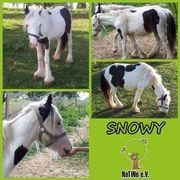 Snowy - Menschen bezogen