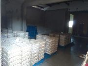Brasilien 8 Ha Eierfabrik - Schafzucht