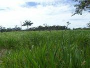 neu Brasilien riesengrosses