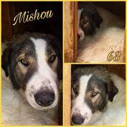 Mishou sucht sein liebevolles Zuhause