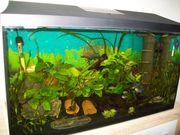Aquarium 105 Liter