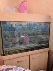 Eck Aquarium zu verkaufen