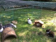 6 kleine Kanninchen-
