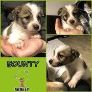 Bounty - knuffiger Wuschel :