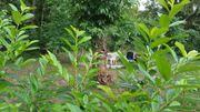 Schrebergärten, Obstgarten, Freizeitgrundstück