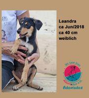 Leandra auf der Suche nach