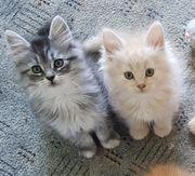 Unsere Kätzchen dürfen ausziehen
