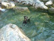 Suche Hundebetreuung Tierbetreuung für 19
