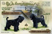 Russische Schwarze Terrier Welpen suchen