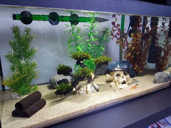 aquarium komplett gebraucht kaufen nur 2 st bis 75 g nstiger. Black Bedroom Furniture Sets. Home Design Ideas