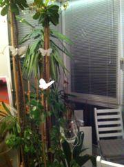 Pflanzen günstig abzugeben!!!