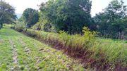 Landwirtschaftliches Grundstück (Ackerland)