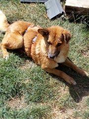 Treuer Familienhund, 6