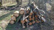 frisches Brennholz Erle