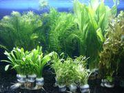 Aquarium Pflanzen Set 10 Bunde