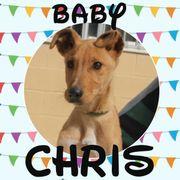 CHRIS - verspielter Baby-