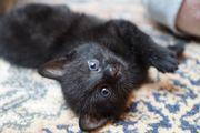 Muntere Katzenkinder suchen