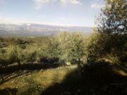 Kleines Haus mit Olivenplantage