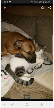 Katze gerne freigang dringend