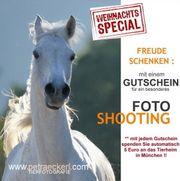 Pferde, Pferdeshooting, Pferdefotografie,