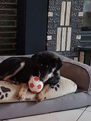 Unkomlizierter Hundejunge sucht seine Familie