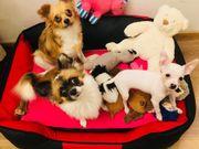 Liebe Hundebetreuung gesucht kein Verkauf