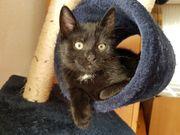Süße Katzenbabys suchen ein Zuhause